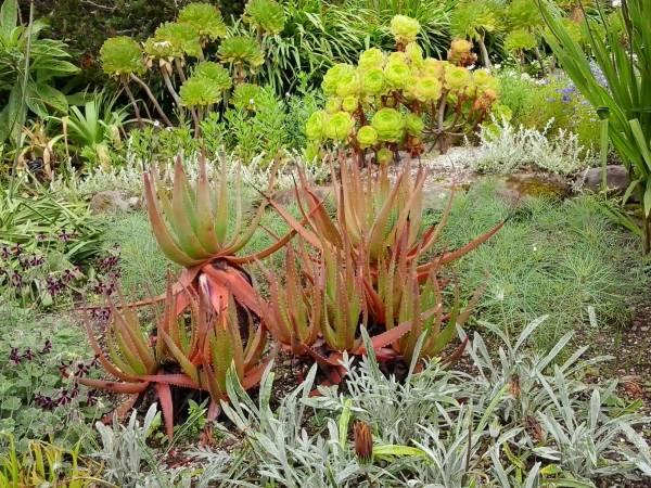 Inverewe Garden, der nördlichste botanische Garten mit Pflanzen aus dem Süden